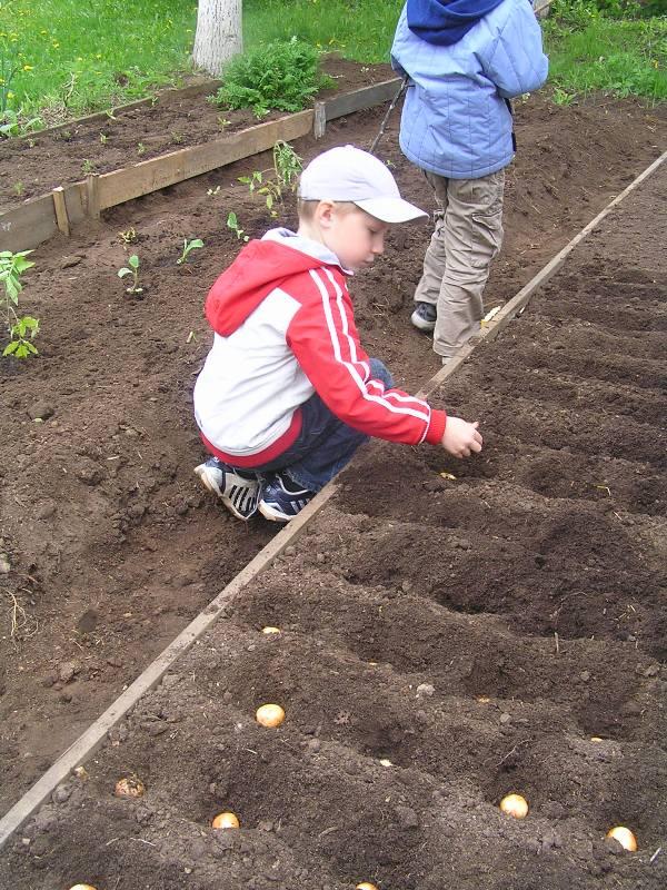 Когда сажают картошку весной 42